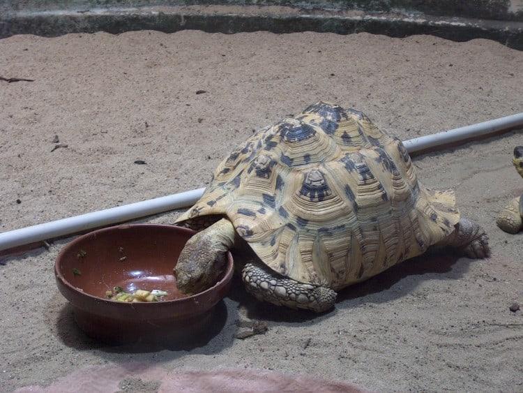 Schildpadden in de Zoo Antwerpen